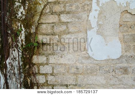 Corrosion brick cement wall with aerial root