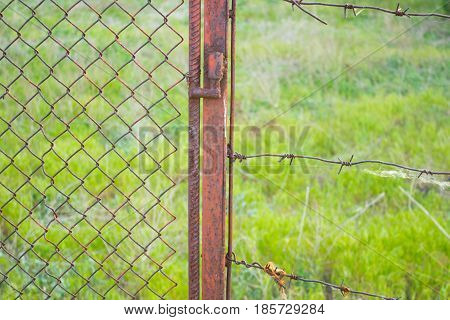 Barbed wire on a background of green lawn grass. Empty place for text copy paste
