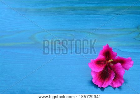 Turquoise blue wooden background with one pink flower and copy space view from above
