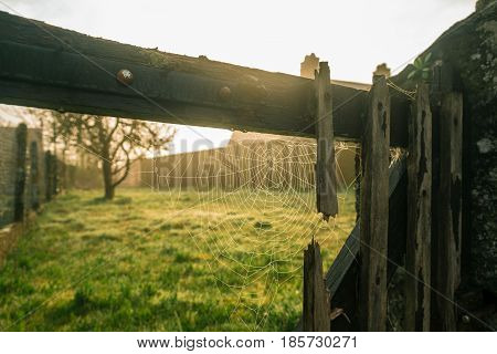 Spider web on a derelict wooden gate of a garden at sunrise in Spring in a French village