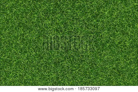 Grass background. Fresh lawn grass texture. Perfect green grass carpet. Grass backdrop for your design