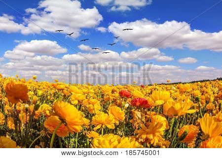 Flock of migratory birds fly under the clouds. The southern sun illuminates the flower fields. Concept of rural tourism