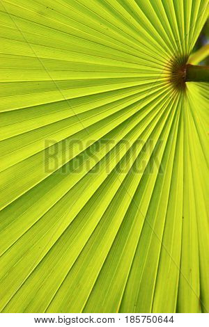 Texture Of A Palm In The Isle Bahamas