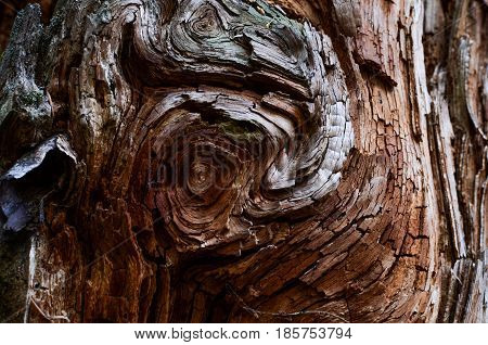 Fancy pattern on a tree in the Siberian taiga
