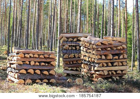 Three neat stacks of chopped and halved pine logs for firewood in spring forest on a beautiful day.