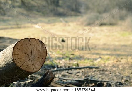 Log On The Background Of Meadows. Picnic, Camping. Summer, Clean