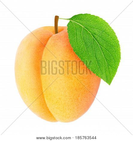 Ripe orange apricot with green leaf isolated on a white