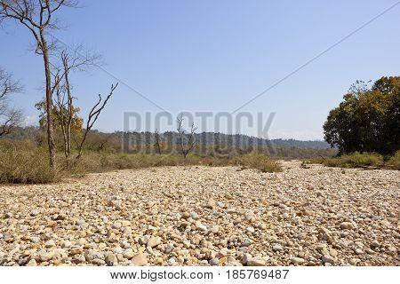 Kalesar Forest Landscape