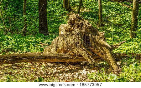 An interesting log in a mysterious and beautiful forest