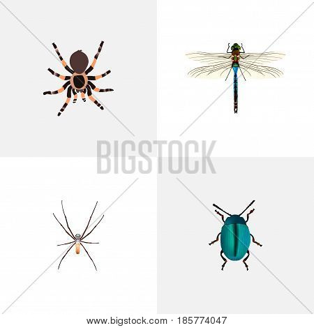 Realistic Tarantula, Bug, Damselfly And Other Vector Elements. Set Of Hexapod Realistic Symbols Also Includes Bug, Insect, Arachnid Objects.