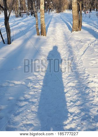 The shadow of the photographer on a forest trail in Sunny winter day