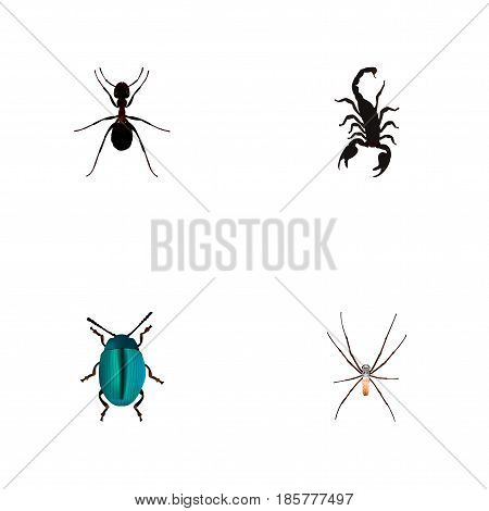 Realistic Ant, Spider, Poisonous And Other Vector Elements. Set Of Bug Realistic Symbols Also Includes Insect, Spinner, Bug Objects.