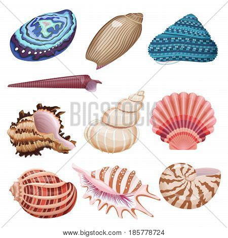 Realistic beautiful colorful vector seashells collection set