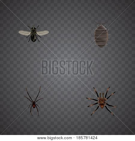 Realistic Spinner, Midge, Dor And Other Vector Elements. Set Of Bug Realistic Symbols Also Includes Bug, Spider, Midge Objects.