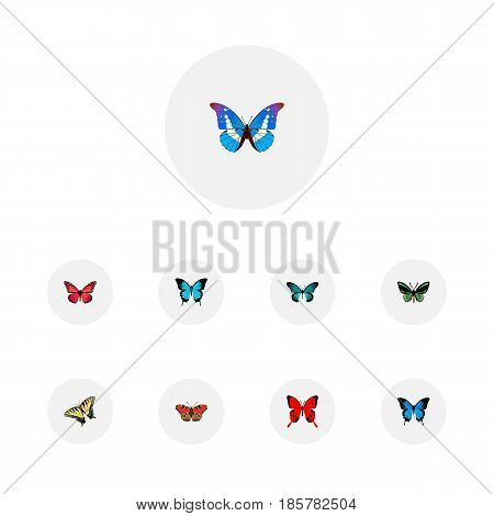 Realistic Common Blue, Pipevine, Checkerspot And Other Vector Elements. Set Of Beauty Realistic Symbols Also Includes Peacock, Morpho, Red Objects.