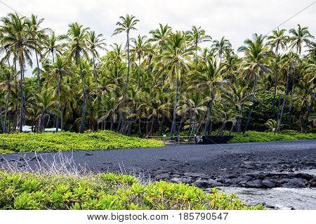 Black sand beach BIG ISLAND HAWAII UNITED STATED