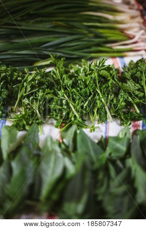 Fresh green vegetables on the table: parsley sorrel spring onions