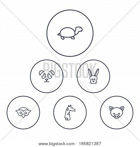 Set Of 6 Brute Outline Icons Set.Collection Of Giraffe, Pig, Owl And Other Elements.
