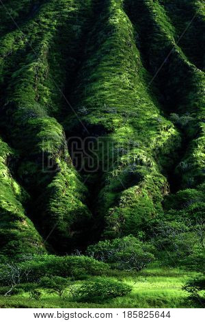 Lush Green Mountain Tropical Foliage