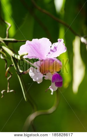 The Orchidaceae are a diverse and widespread family of flowering plants with blooms that are often colourful .