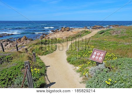 PACIFIC GROVE CALIFORNIA - MARCH 17 2017: Walkway sign surf rocks and early spring wildflowers of the park at Asilomar State Beach on the Monterey Peninsula.