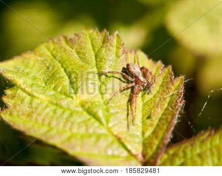 Close Up Of A Spider On A Leaf Outside In The Spring Day Light Macro