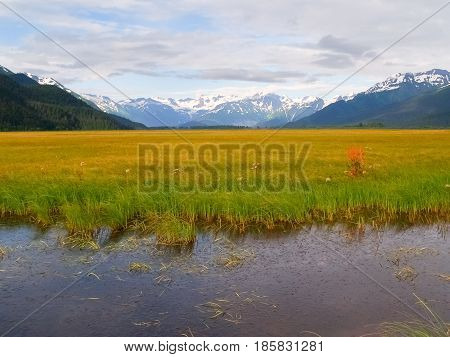 Lush green bright yellow vegetation of wetland bent in wind surrounded by distant snow covered mountains Alaska.