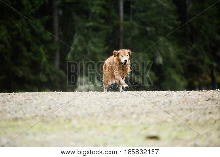 dog running toward camera