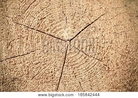 Wood texture, cut logs, log of poplar, close-up, macro
