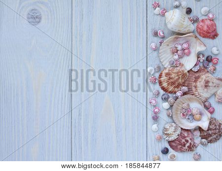 Marine background with seashells on wooden planks. Border of seashells. Top view.