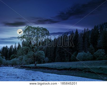 River flows among of a green forest at the foot of the mountain. picturesque nature of rural area in Carpathians at night in full moon light