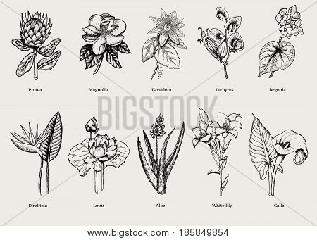 Hand drawn exotic plants set with natural tropical flowers in vintage style isolated vector illustration