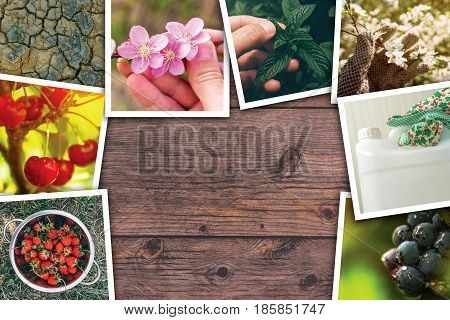 Orchard and agriculture photo collage on wooden background as copy space