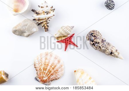 Mixture of shells spreaded on white background evoking traveling and sea
