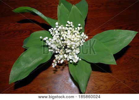Lily of the valley green leaves stand on the table