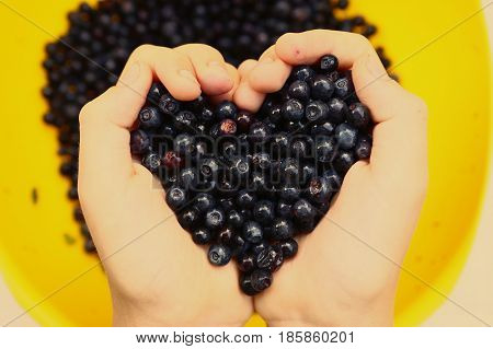 heart shape handful of bilberry close up photo