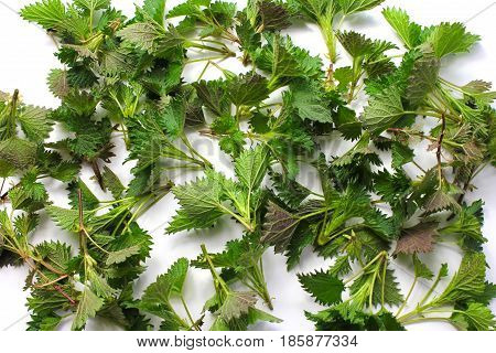 Young nettles as a background on the white background. Herb for spring collection and detoxification.
