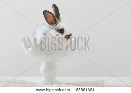 beautiful rabbit in vase on white table