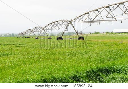 Field irrigated by a pivot sprinkler system