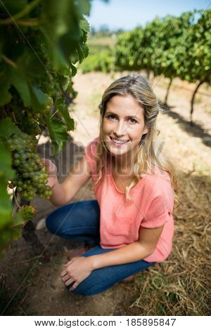 Portrait of smiling woman holding grapes on plant while crouching at vineyard