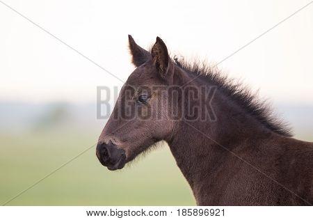 Foal Standing On Meadow