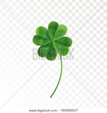 Four Leaf Clover on a transparent background. Vector illustration for the holiday of St. Patrick. Green clover in a realistic style.
