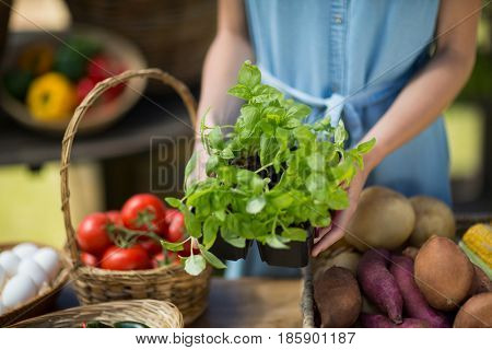 Mid section of woman holding leaf vegetable at farmer market