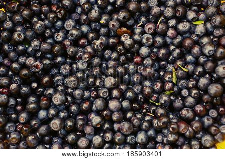 Bilberry On The Market Close Up