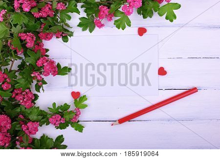 Empty sheet of paper and a red wooden pencil on a white surface in the corner a branch of hawthorn with pink flowers