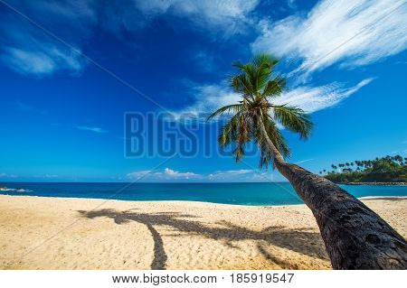 Lonely palm tree at the beach of tropical sea
