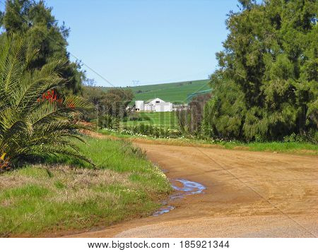 DARLING, CAPE TOWN SOUTH AFRICA, A PATH, WITH TREES AND FLOWERS ON EITHER SIDE OF THE PATH LEADING UP TO FARM BUILDINGS