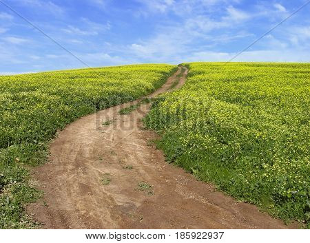 DURBANVILLE, CAPE TOWN,  SOUTH AFRICA, OPEN FIELD, WITH PATH WAY LEADING TO THE TOP OF THE FIELD