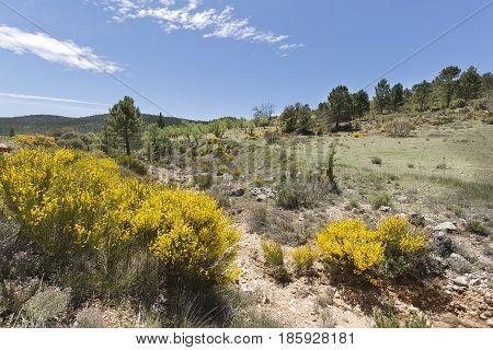 Landscape In Cañadas De Haches De Arriba.