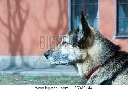 Portrait Of A Beautiful Spitz-dog Against A Green Grass